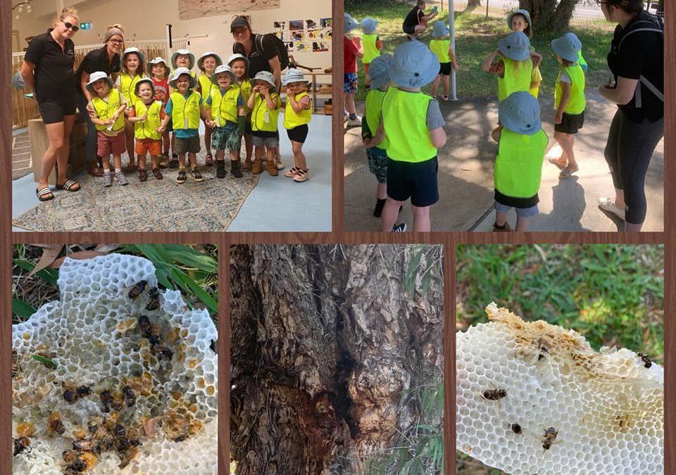 Bee Hive trip.